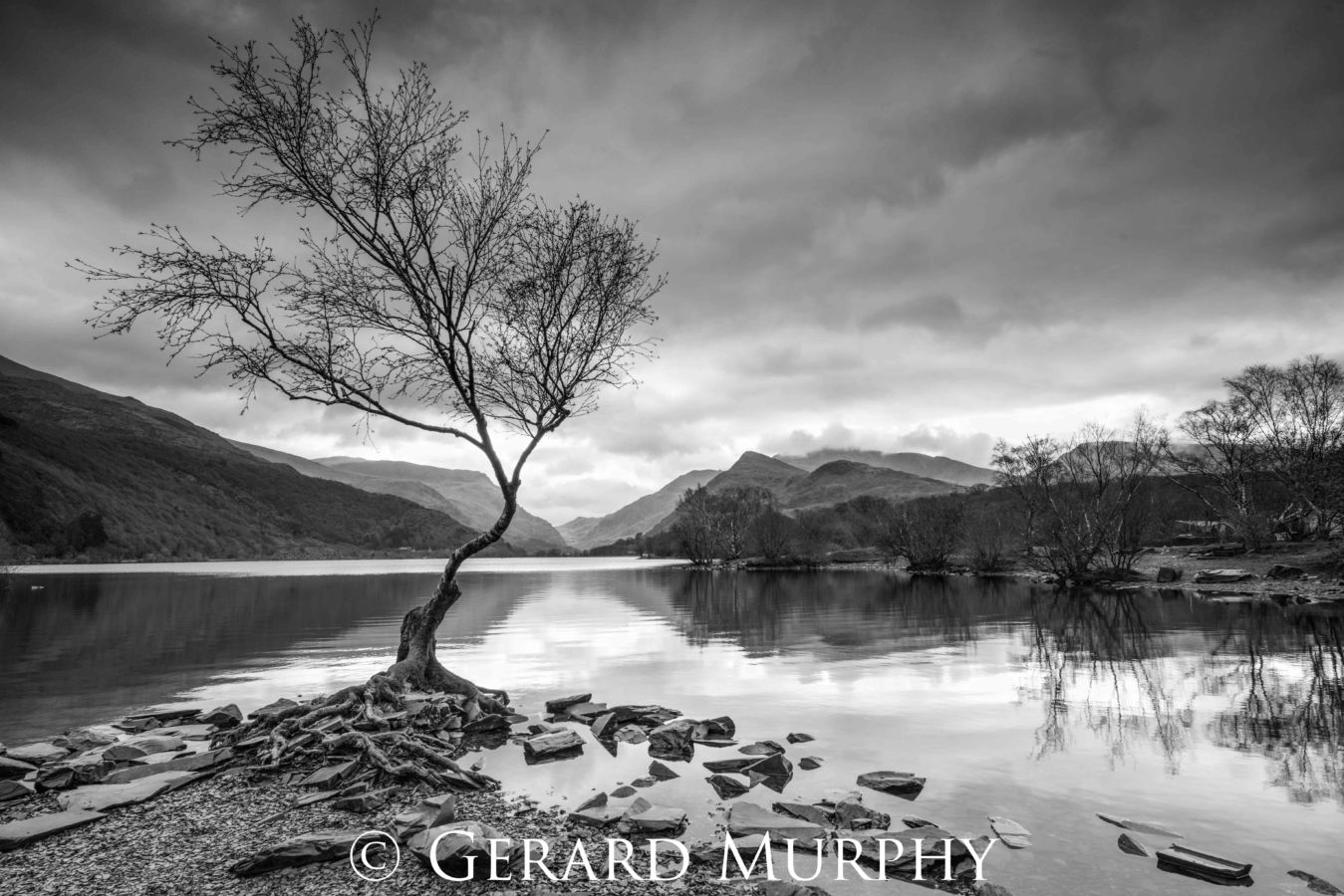 Lone Tree by Gerard Murphy - black and white photograph of a tree at the edge of a loch